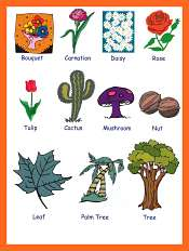 Plants and Flowers Vocabulary For Kids